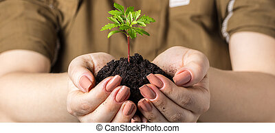 Woman's hands with a young plant