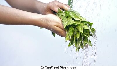 Woman's hands with mint plant - Water drops pouring on a...