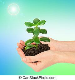 womans, mãos, segurando, planta