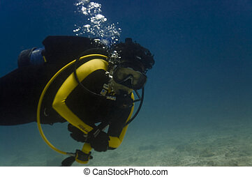diver - Women diver underwater hovering above sandy sea...