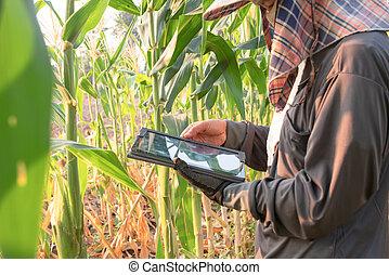 Women farmer checking the growth of corn farm
