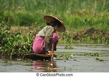 Women Fishing - Myanmar women fishing in Inle Lake.