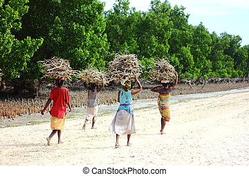 woman transporting fuelwood on their head, back from mangrove ecosystem