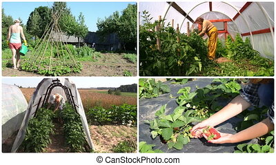 Women gardener care plant and harvest in garden. Clip collage