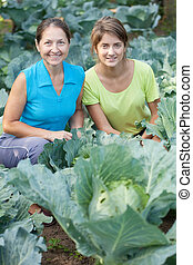 women  in plant of cabbage