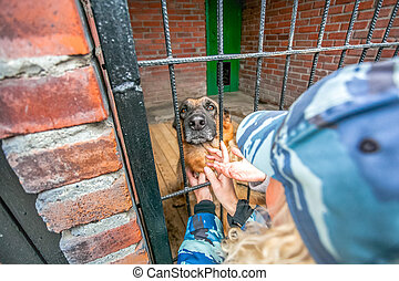 Women petting stray the shepherd military dog in a crate