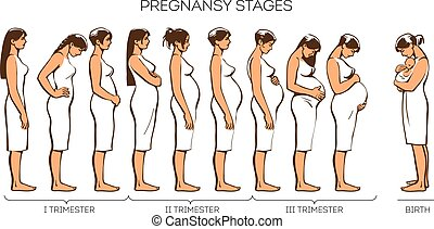 Women Pregnancy Stages - Stages of pregnancy. Vector image...