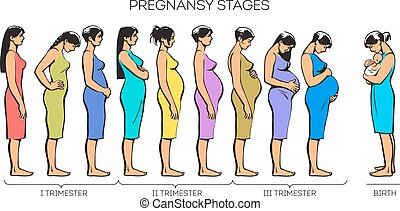 Women Pregnancy Stages