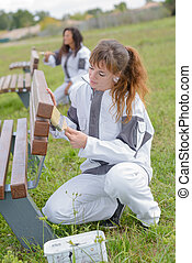 Women varnishing outdoor benches