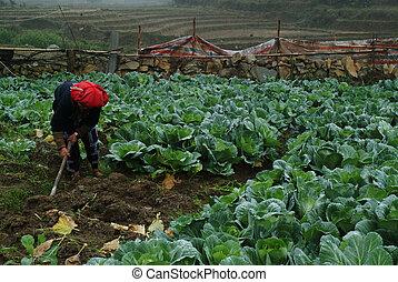 Women working in vegetable farm.