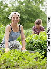 women working in  vegetable garden