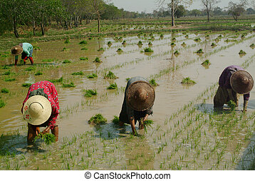 womens, csoport, myanmar, dolgozó