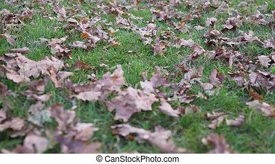 Women's feet pass by on beautiful fallen leaves on white ...