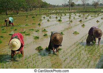 womens, gruppe, myanmar, arbeitende