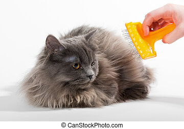Women's hand brushed fluffy cat - Persian kitten and a crest...