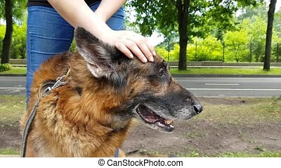 Women's hands screw an old dog neck outdoors