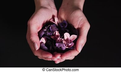 Women's hands show dry flowers on a black background. Aromatherapy in the palms. The concept of well-being and natural ingredients for calm 4k
