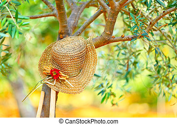 Womens hat on the tree in the olives garden, autumn harvest...