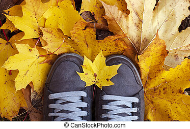 Women's shoes in yellow leaves. Top view