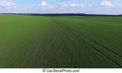 Wonderful aerial view of fields of young wheat. 4K