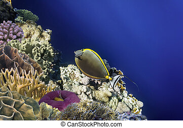 Wonderful and beautiful underwater world with corals. Red Sea.