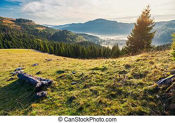 wonderful autumn landscape in mountains at sunrise. spruce...