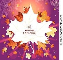 Wonderful autumn leaves
