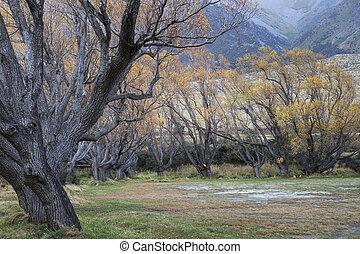Wonderful autumn yellows