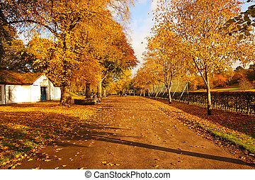 Wonderful autumnal scene in the park