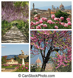 wonderful blooming plants in springtime in Florence - group of i