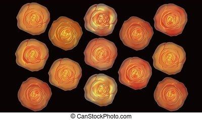 Wonderful burning roses video background. Rotating roses