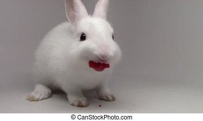 Wonderful close up view on fluffy white cute rabbit tiny little bunny munching eating strawberry on white background