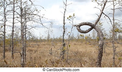 Wonderful knot in node tree - Unusual rolled in ring tree...