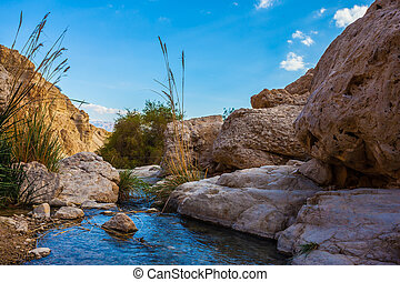 Wonderful Middle Eastern landscape. The stream of cold pure...