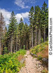 Wonderful mountain trail in the forest