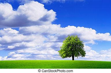 Wonderful natural environment