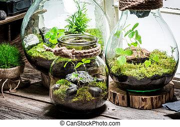 Wonderful rain forest in a jar, save the earth idea