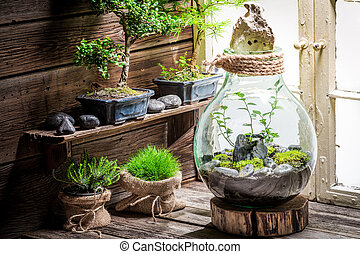 Wonderful rain forest in a jar with self ecosystem