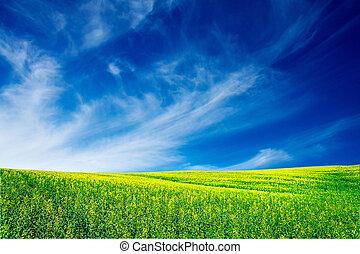 Vibrant rapefield and blue sky.