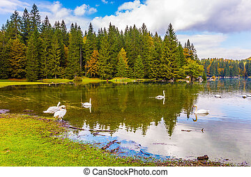 Wonderful rest on lake Lago de Fusine - Spring Flood. The...