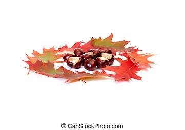 Wonderful view of autumn leaves and chestnuts.