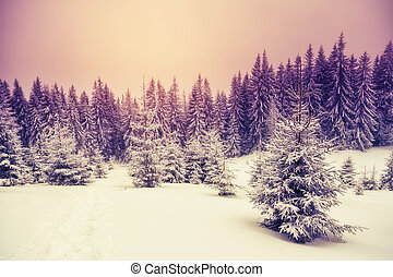 wonderful winter landscape - Amazing evening winter ...