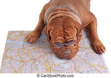 Wondering where to go