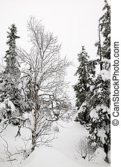 wonderland inverno