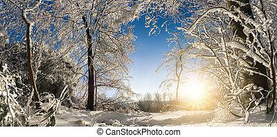 wonderland, soleggiato, inverno