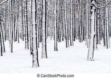 wonderland, winter