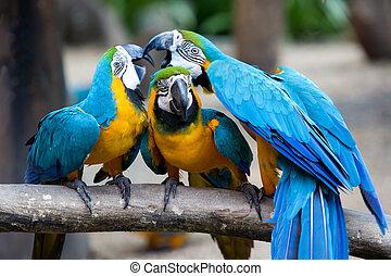 wood., 青, 遊び, macaws