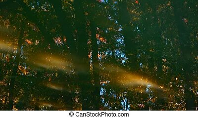 wood and water - reflection of the autumn wood and water