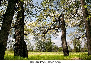 Wood aspen. Summer landscape, grass green juicy and trees.