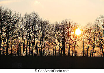 wood at the sunset